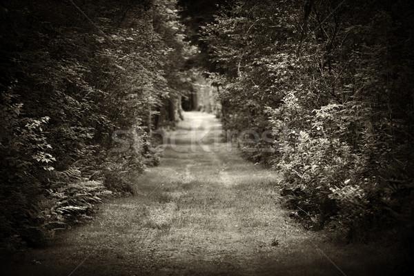 Dirt road through forest Stock photo © elenaphoto