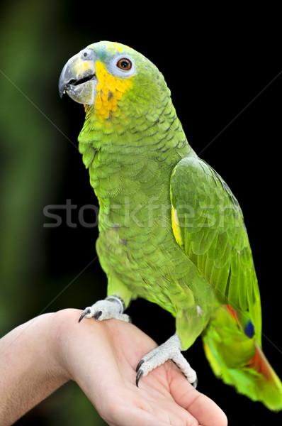 アマゾン オウム 黄色 鳥 緑 鳥 ストックフォト © elenaphoto