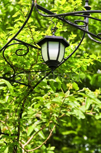 Lanterna ferro lussureggiante verde giardino Foto d'archivio © elenaphoto