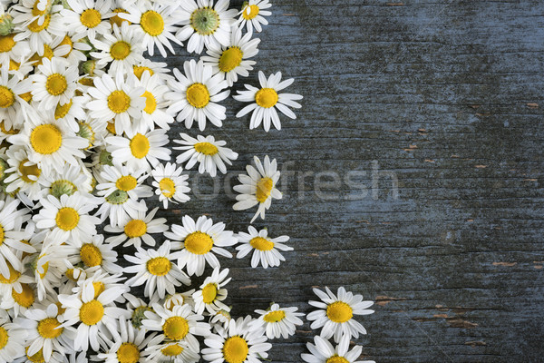 Fresh chamomile flowers Stock photo © elenaphoto
