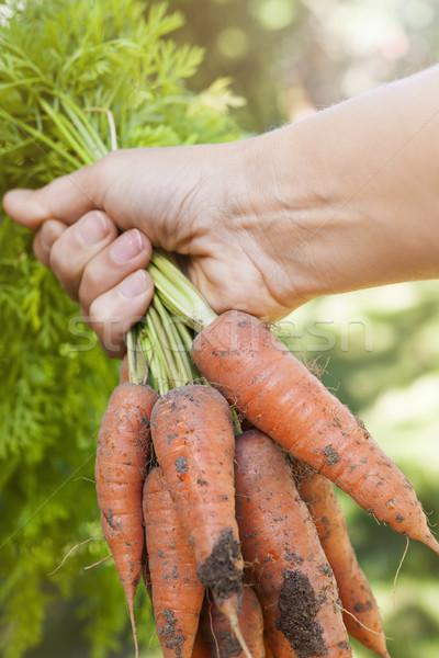 Fresh carrots from garden Stock photo © elenaphoto