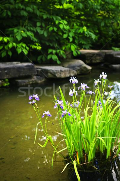 Stock photo: Purple irises in pond