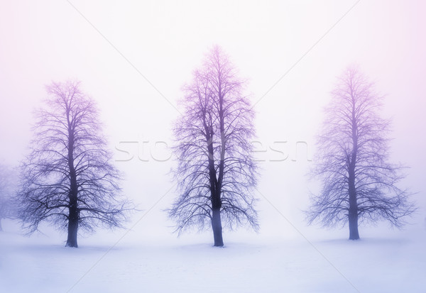 Stock photo: Winter trees in fog at sunrise