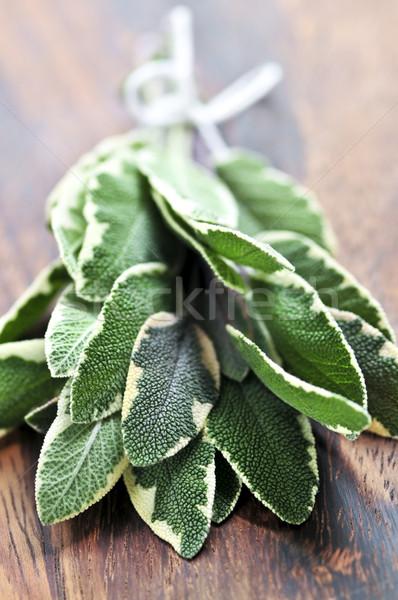 Bunch of fresh sage Stock photo © elenaphoto
