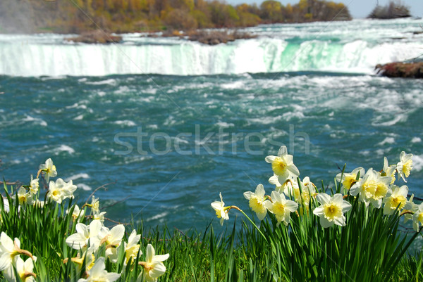 Niagara Falls Stock photo © elenaphoto