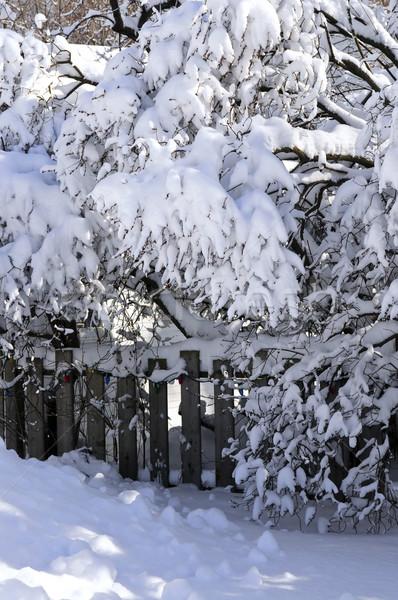 Casa cerca invierno árboles cubierto pesado Foto stock © elenaphoto