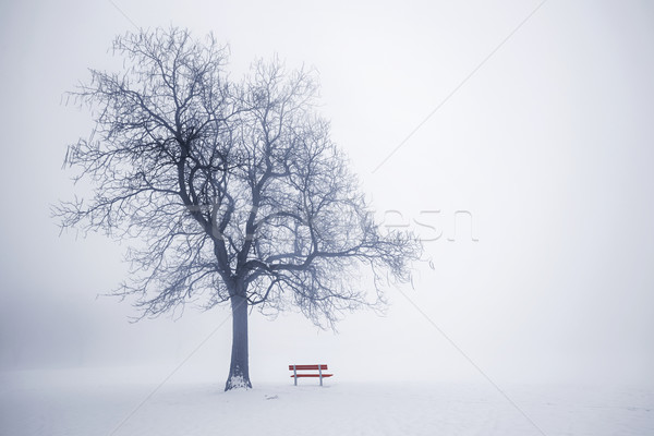 Winter tree in fog Stock photo © elenaphoto