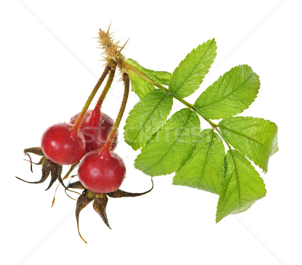 Branch with rose hips Stock photo © elenaphoto