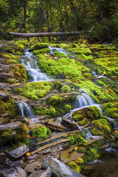 çağlayan yeşil yosun kapalı kayalar park Stok fotoğraf © elenaphoto