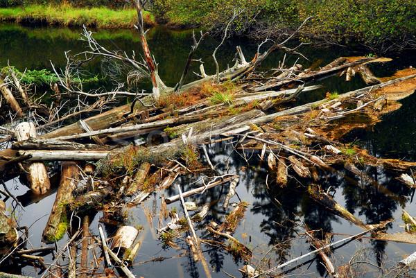 Troncos rio floresta parque Canadá água Foto stock © elenaphoto