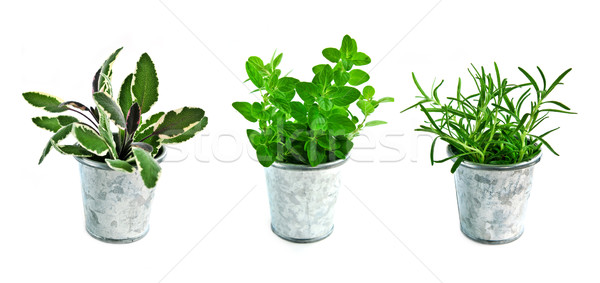 Fresh herbs Stock photo © elenaphoto