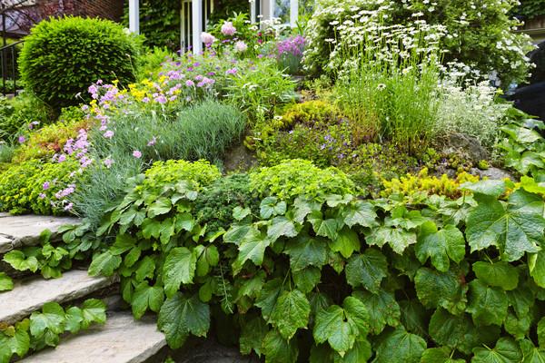 Lush garden at home Stock photo © elenaphoto