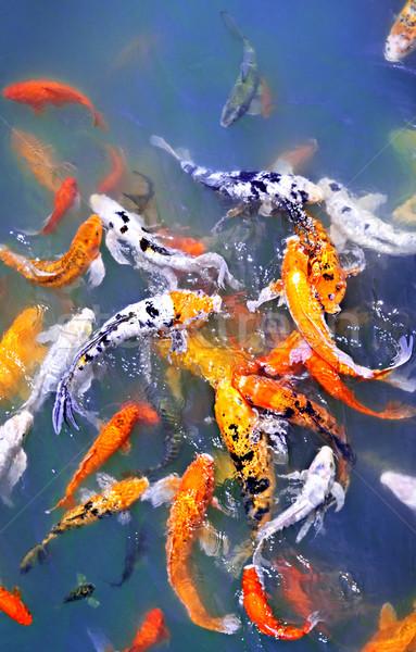 Koi vis vijver kleurrijk oppervlak water Stockfoto © elenaphoto