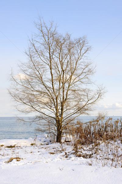 Invierno árbol costa lago ontario parque Foto stock © elenaphoto