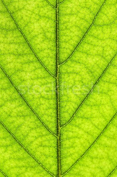 Green leaf texture Stock photo © elenaphoto