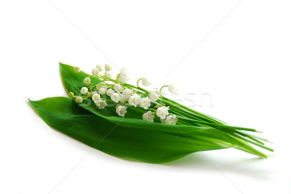 Lily-of-the-valley on white Stock photo © elenaphoto
