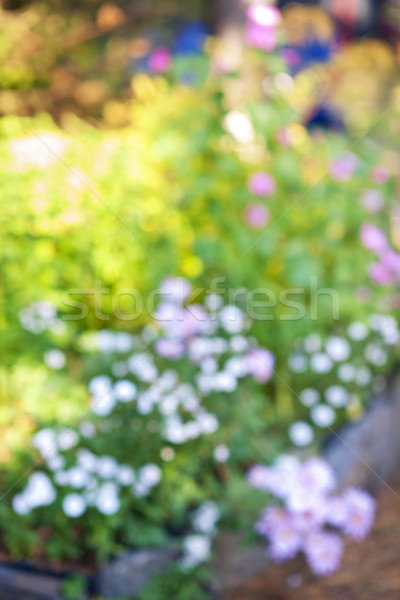 Defocused flower garden Stock photo © elenaphoto