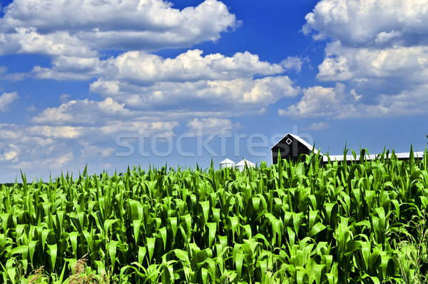 Stock photo: Rural landscape