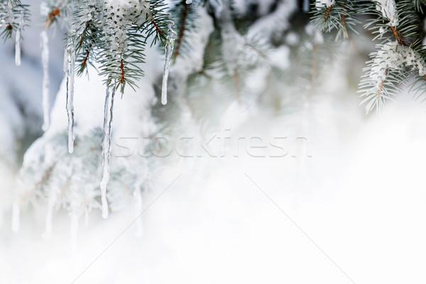 Tél fenyőfa karácsony akasztás lucfenyő ágak Stock fotó © elenaphoto