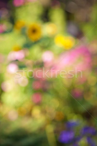 Jardim de flores abstrato turva fora foco fundo Foto stock © elenaphoto