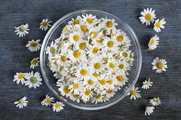 Zdjęcia stock: Rumianek · kwiaty · puchar · świeże · leczniczy · Roman