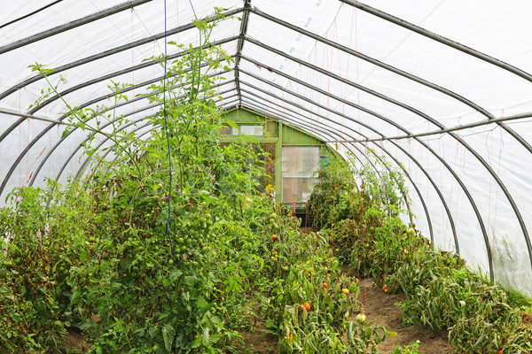 Inside greenhouse Stock photo © elenaphoto