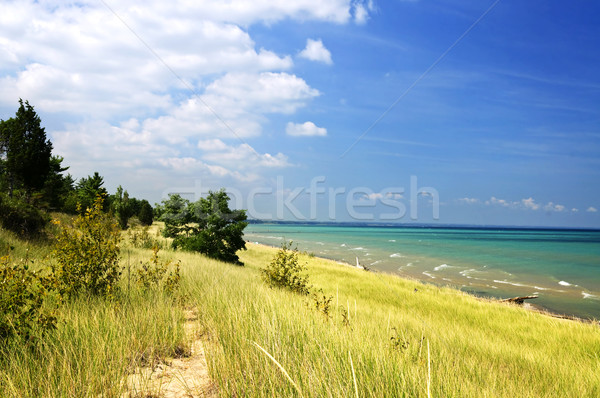Sand dunes at beach Stock photo © elenaphoto