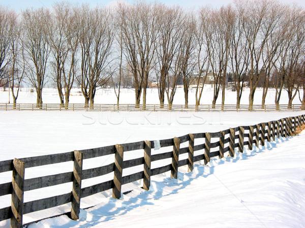 Farm fence and trees 1 Stock photo © elenaphoto