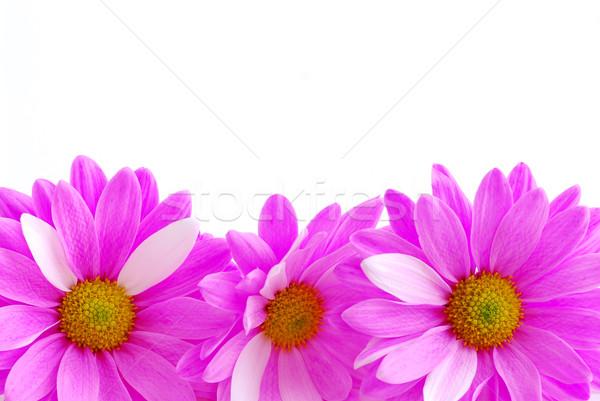 Pembe çiçekler sınır beyaz çiçek Stok fotoğraf © elenaphoto