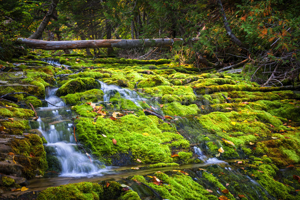 Waterfall over mossy rocks Stock photo © elenaphoto