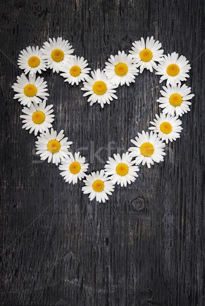 Daisy heart on dark wood Stock photo © elenaphoto