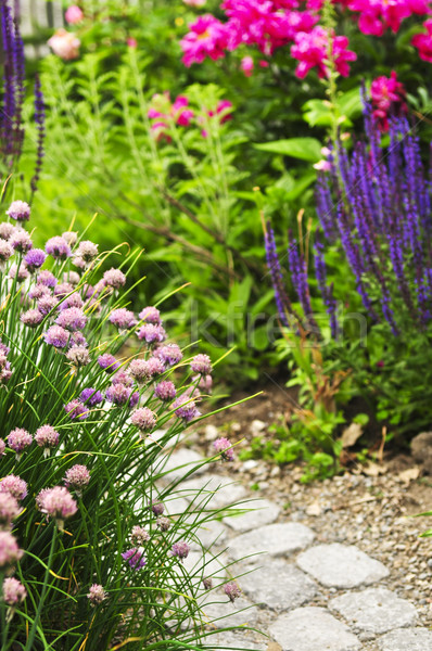 Сток-фото: пути · саду · пышный · лет · цветы