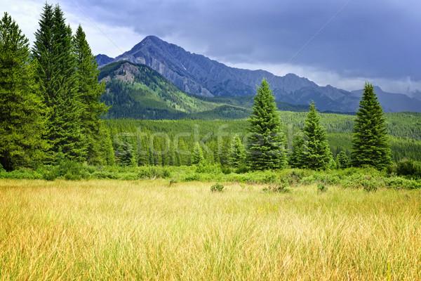 Scenic view in Canadian Rockies Stock photo © elenaphoto