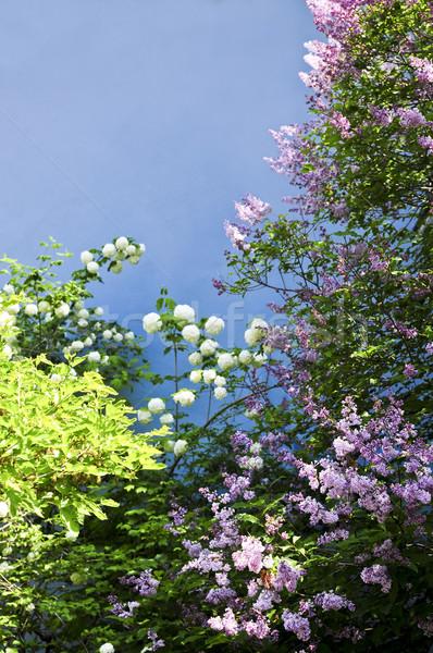 花 フローラル 青 壁 花 ストックフォト © elenaphoto