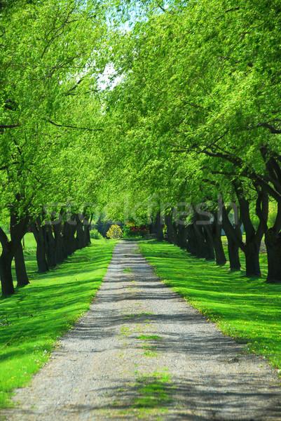 Green tree lane Stock photo © elenaphoto
