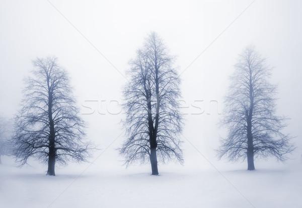 Zdjęcia stock: Zimą · drzew · przeciwmgielne · mglisty