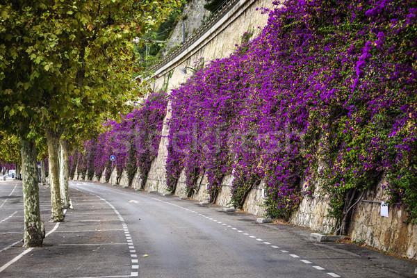 地中海 開花 低木 ピンク 登山 石の壁 ストックフォト © elenaphoto