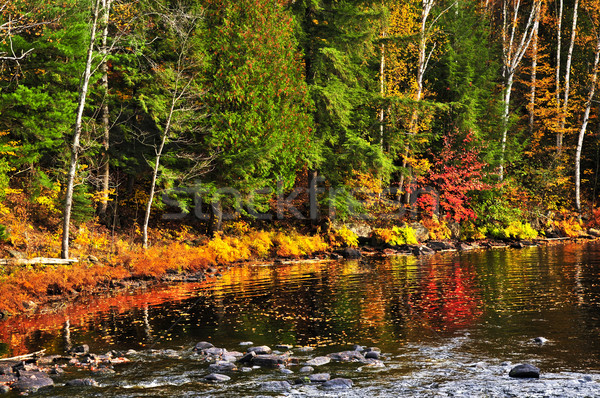 Fall forest and lake shore Stock photo © elenaphoto