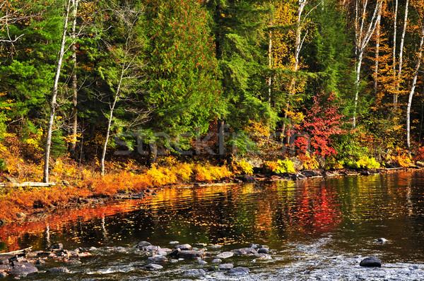 Cair floresta lago costa colorido reflexões Foto stock © elenaphoto