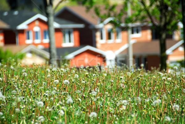 Wohn- Straße Häuser Frühling Zeit Gebäude Stock foto © elenaphoto