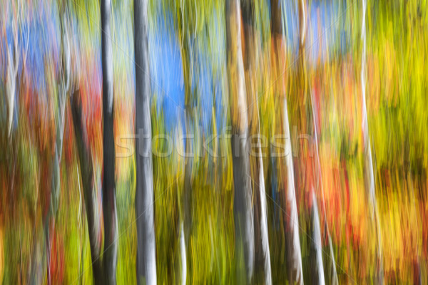 Fall colors abstract Stock photo © elenaphoto