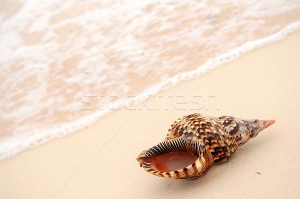 Seashell and ocean wave Stock photo © elenaphoto