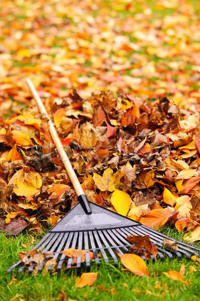 осень листьев грабли вентилятор газона Сток-фото © elenaphoto