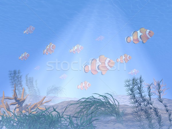Clownfish or anemonefish underwater - 3D render Stock photo © Elenarts