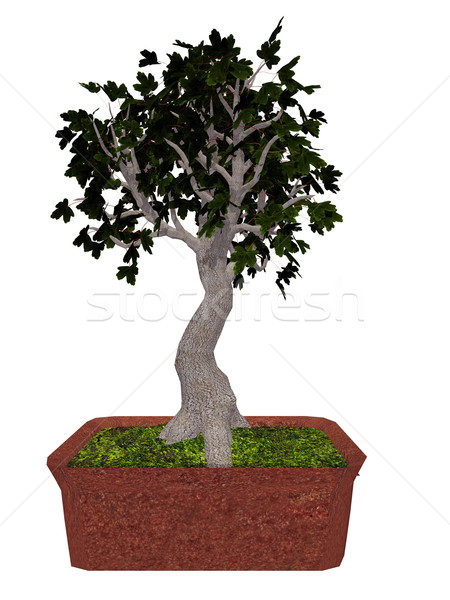 Field maple tree bonsai - 3D render Stock photo © Elenarts
