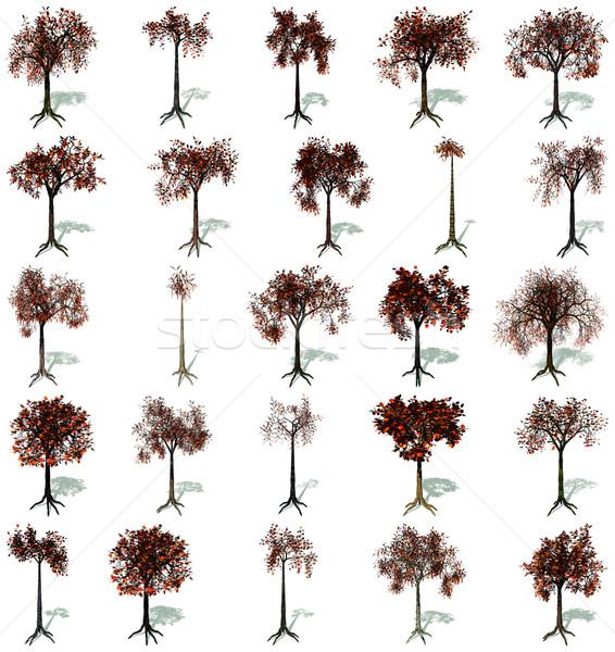 Autumn trees set Stock photo © Elenarts