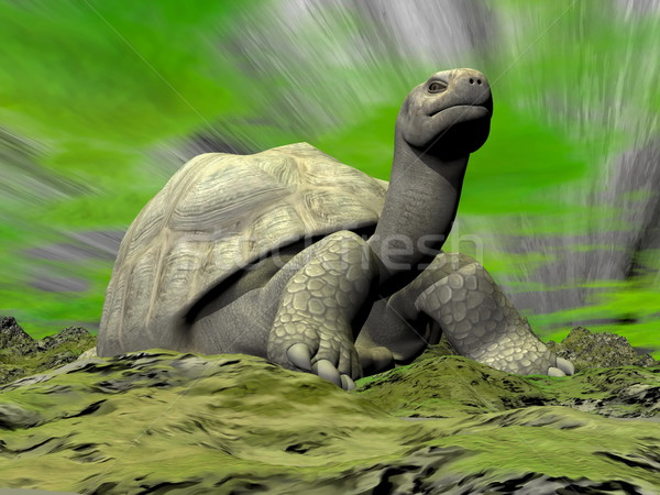 Galapagos tortoise looking at you - 3D render Stock photo © Elenarts
