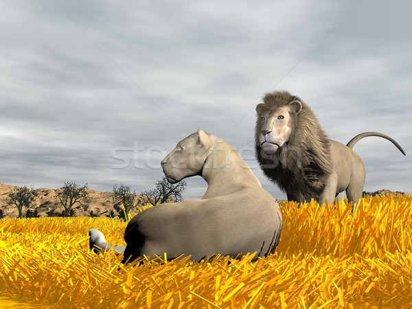 Couple of lions in the savannah - 3D render Stock photo © Elenarts