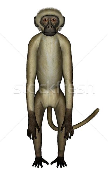 Monkey perplexed - 3D render Stock photo © Elenarts
