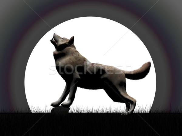 Wold howling at night - 3D render Stock photo © Elenarts